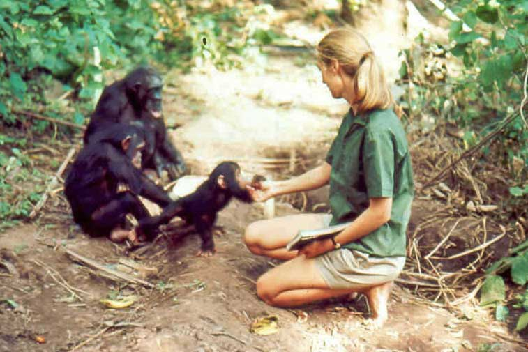 a plea for the chimpanzees jane goodall essay In the long run, we can hope that scientists will find ways of exploring human physiology and disease, and of testing cures and vaccines, that do not depend on the a plea for the chimpanzees jane goodall medical research laboratory, united states.